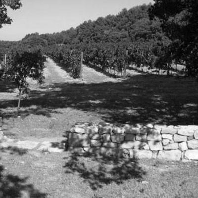 Saint Julien les Vignes
